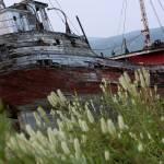 """""""Ship wreck"""" by Beckerphotos"""