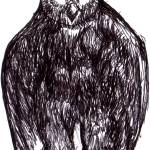 """Northern Dark Horned Owl"" by MisterJ"
