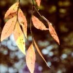 """autumnfallsonleaves"" by YYsees"