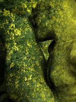 Homage to Rodin's Eternal Idol Variation Rapeseed