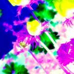 """""""Funky Flowers"""" by PosterPhotoArt"""