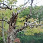 """""""dead tree"""" by imagineit"""