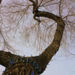 """Christmas Lights on Tree"" by dmarshall"