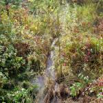 """Wild life stream in Beaverton, Oregon"" by serenethos"