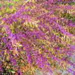 """Beautiful purple flowers in Beaverton, Oregon"" by serenethos"