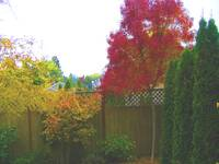 Lovely back yard colors in Beaverton, Oregon