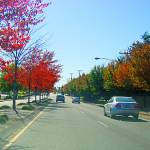 """Beautiful autumn drive in Beaverton, Oregon"" by serenethos"