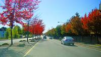 Beautiful autumn drive in Beaverton, Oregon