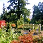 """Portland, Oregon rose garden"" by serenethos"