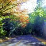 """Drive to Portland, Oregon rose garden"" by serenethos"