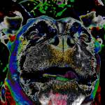 """""""colour dog"""" by georgieboy"""