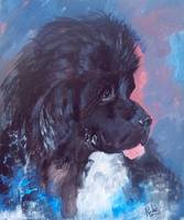 Newfoundland Dog: A Portrait