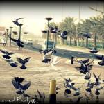 """Doves In The City"" by Mohamed-Fadly"