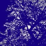 """""""Blue"""" by parakeetart"""