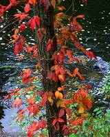 Red Leaves & River