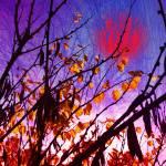 """""""Leaf Alone"""" by katbesthorn"""