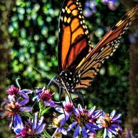 Flight of the Monarch... Art Prints & Posters by dornickdesigns