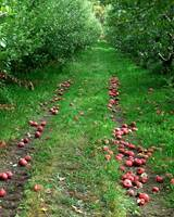 Apple Tracks
