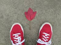 First Red Leaf of Autumn