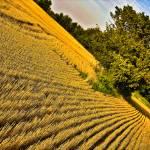 """Wheat field after cropping"" by NacoPhotography"