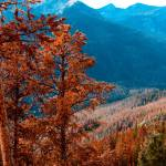 """Rocky Mountain National Park-2"" by lisad"