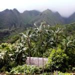 """""""Hawaii Hut"""" by lisad"""