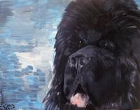 Portrait of a Newfoundland Dog