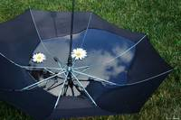 The Umbrella Bowl