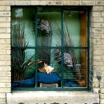 """Fish in the window"" by DuffyPhoto"