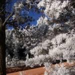 """Frozen Morning"" by iThinkMedia"