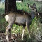 """""""Deer Me"""" by iThinkMedia"""