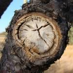"""""""is time"""" by fotoarte"""