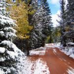 """Christmas Tree Stylized"" by iThinkMedia"