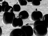 Back In Black (Pumpkins)