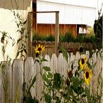 """g-wildflower and house Sept 2007-800x800"" by photosbycherylann"