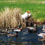 """Dog & Ducks, New Zealand"" by snaptherapy"