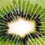 """Kiwi"" by amybrown"