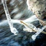 """""""icedrops 2"""" by gunniebunnie"""