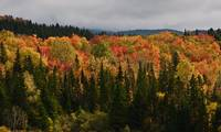 Sunlit Fall Foliage