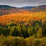 """""""Autumn Splendor"""" by awgilmore"""