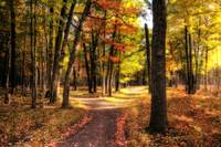 Footpath in Autumn