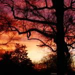 """dusk"" by shannonpalmer"