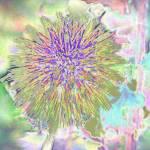"""pastel"" by clickdecourcyNI"