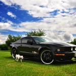 """Stang in Upstate NY"" by seeitpictures"