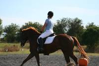 From Brookstone Dressage