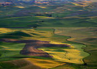 Palouse Shadows
