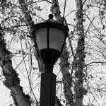 """Lamp Post"" by scottcoleson"