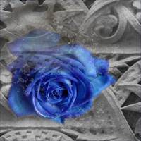 Blue Celtic Rose part 2