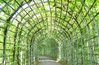 Vine-Covered Archway