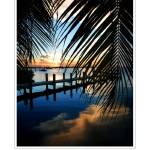 """Sunset & Palms - Key Largo, FL"" by CCordelia"